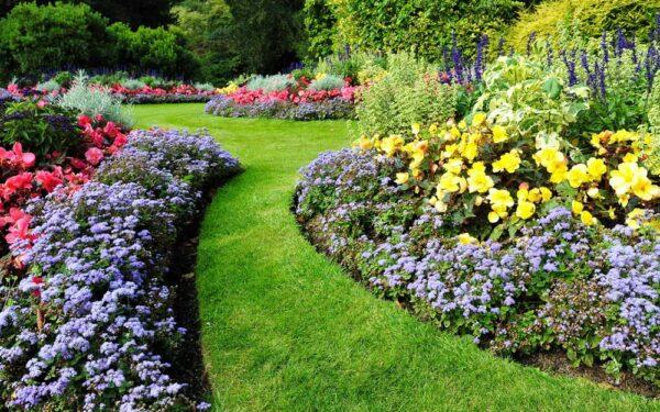 hage med blomster